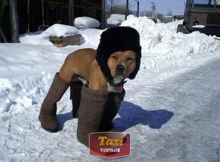 собачий холод такси зима